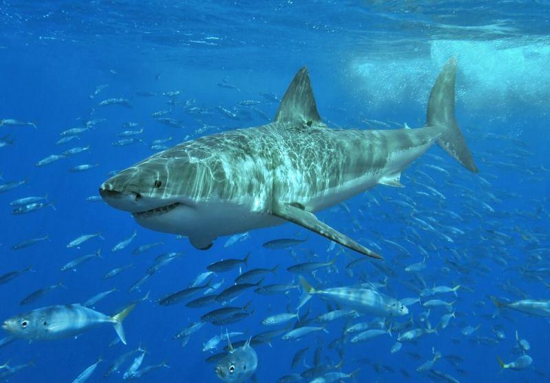 A part közelben ölt a cápa