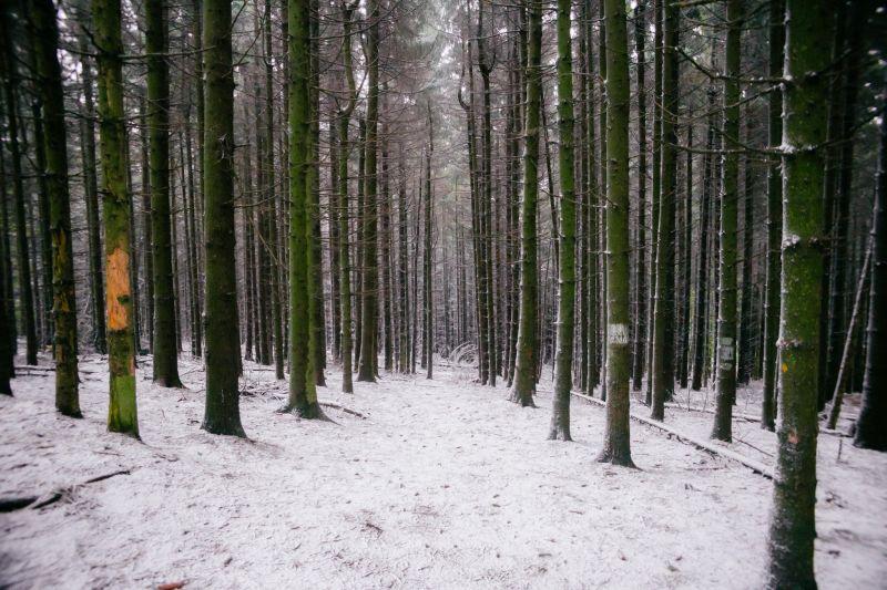 Itt a májusi hó – a kőszegi erdők kifehérdektek
