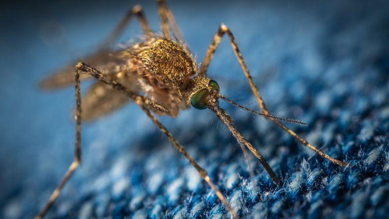 Ezek a legjobb természetes szúnyogriasztók