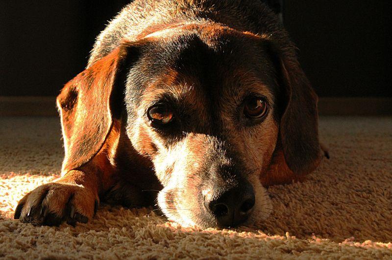 Bérgyilkossal ölette meg a kutyáját egy nő