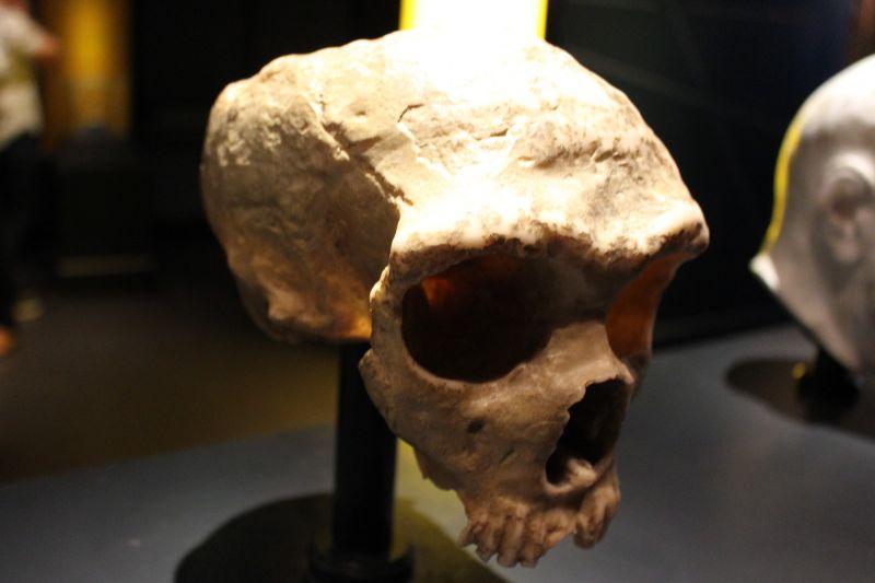 Az igazi lúzer: fülgyalladás miatt halt ki egy emberi faj