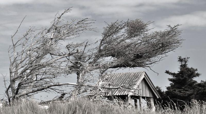 Fákat tépett ki a vihar Nógrádban