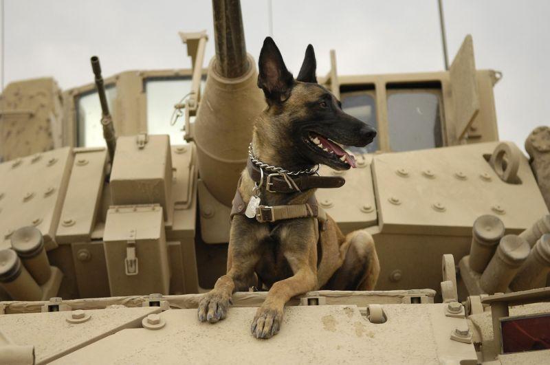 Ez a kutya segített elkapni a hírhedt terroristavezért – fotó