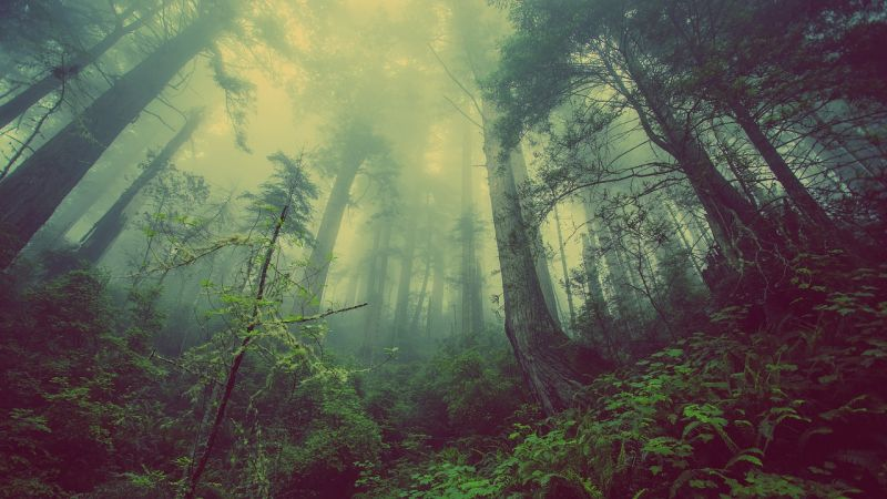 Az a kérdés, hogy napközben megmarad-e a köd