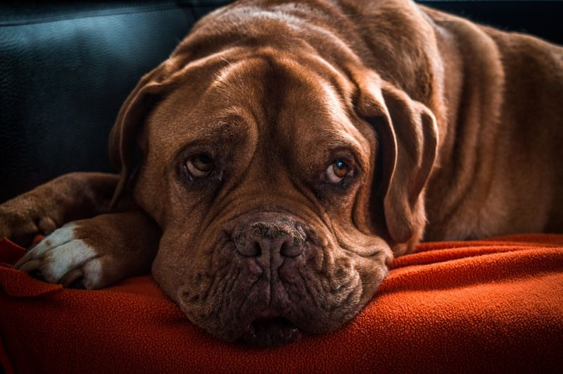 Iszonyatos körülmények között tartották kutyáikat – ezt kapta büntetésül a két zalai állatkínzó