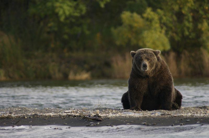 Megint embert ölt egy medve Erdélyben