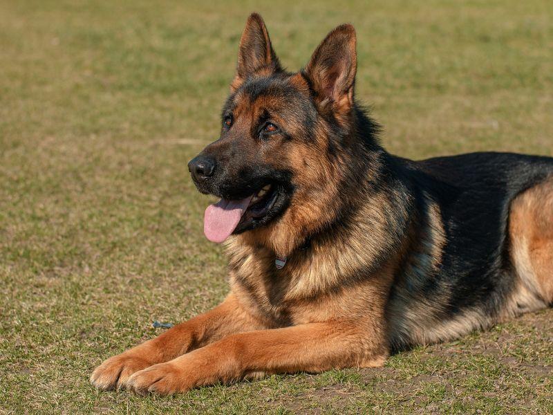 Kutyákat mentettek a tenyésztőtől Pécs közelében
