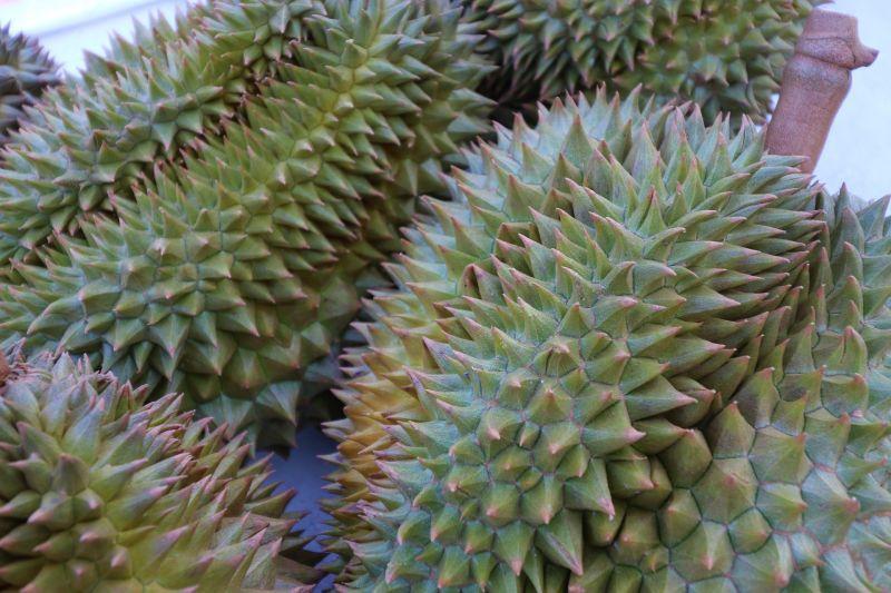 Íme a világ legbüdösebb gyümölcse, a durián