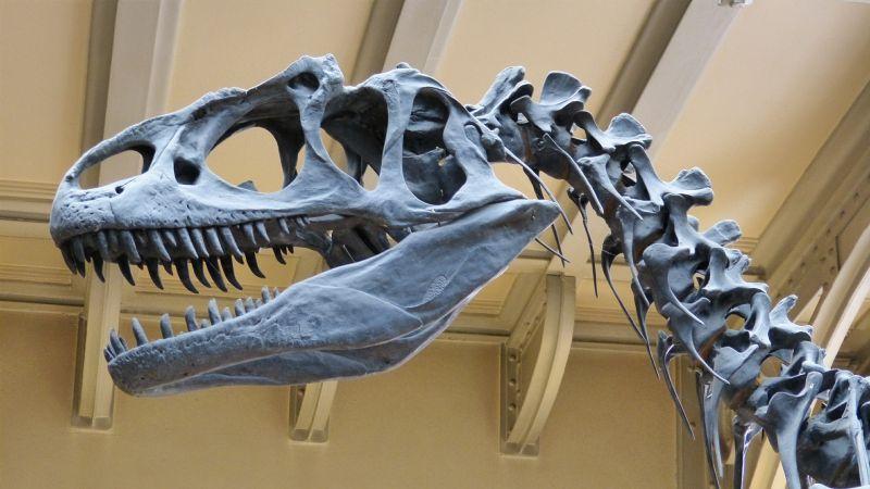 Magyar kutatók is vizsgálják a dinoszauruszok gyors növekedését