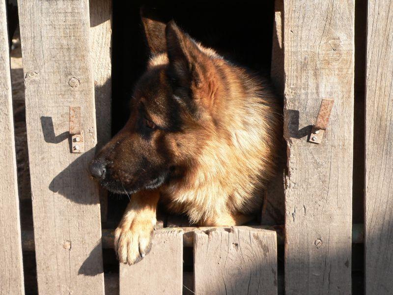 Kilenc kutyát vertek halálra, majd dobtak a sintértelep konténerébe