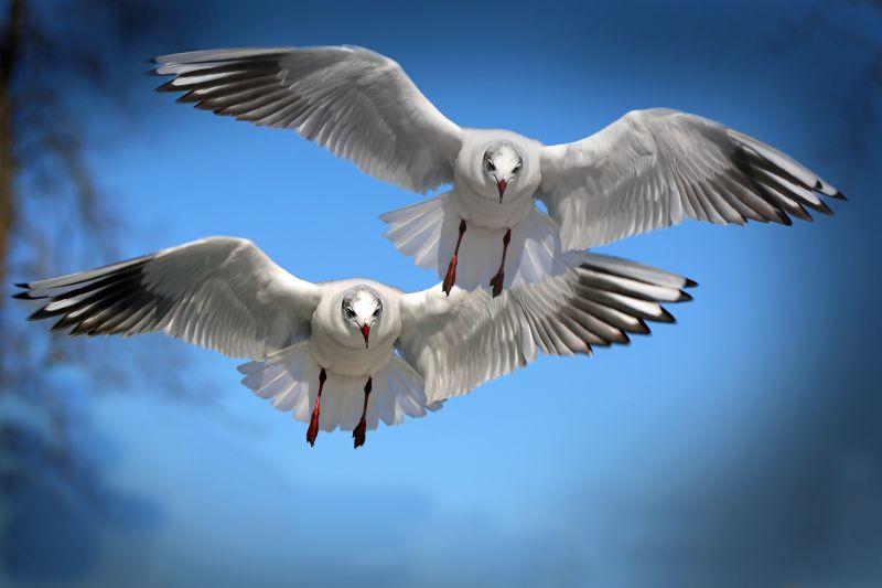 A felmelegedés sújtja a madarakat is