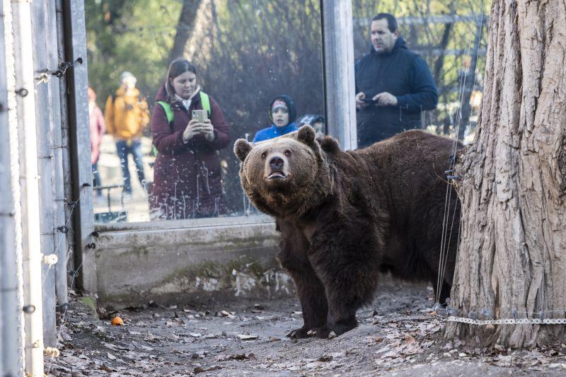 Rossz hír: tényleg meglátta árnyékát a medve