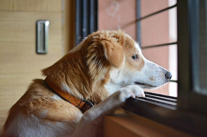 Kutyatartók, vigyázat! – valakik folyamatosan próbálják megmérgezni a kutyákat Pécsen