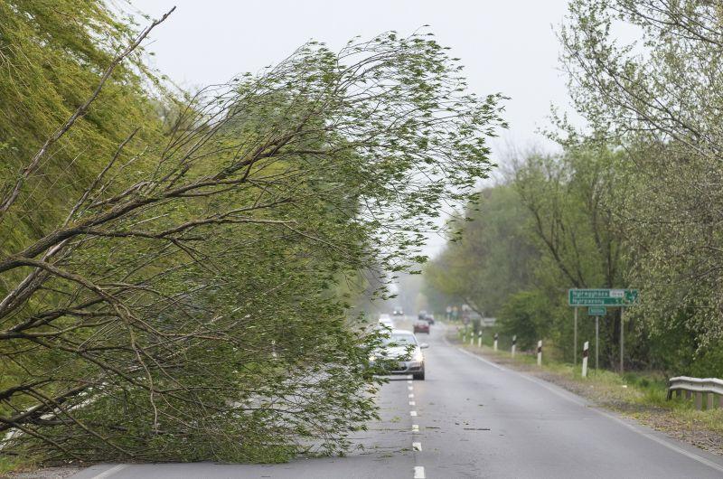 Fákat dönt a viharos szél