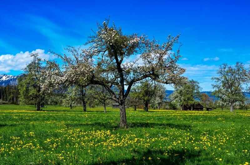 Szép lassan visszatér a tavasz