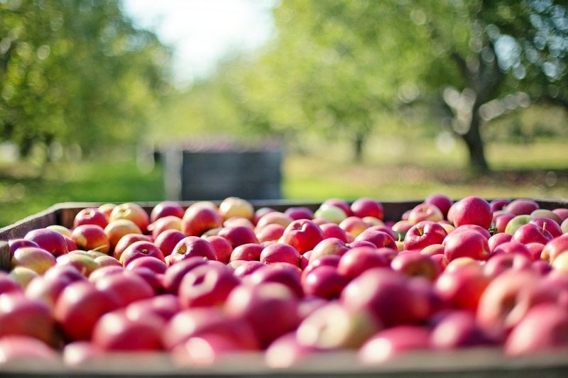 Ezért árulják aranyárban az almát