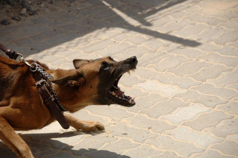 Egy elszabadult nagytestű kutya megmart egy idős nőt Hernédkércsen