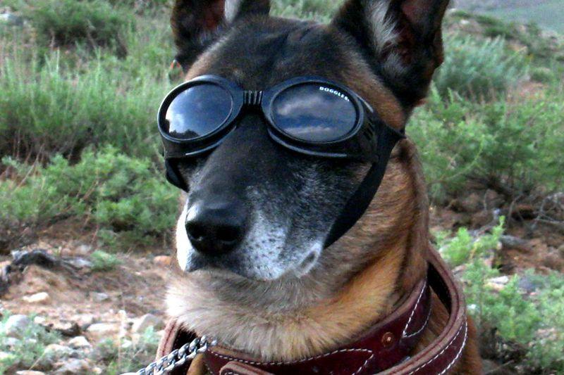 Akcióban a NAV kutyái: 2300 bűncselekményt akadályotak meg, több száz millió forintot gyűjtöttek be az ebek