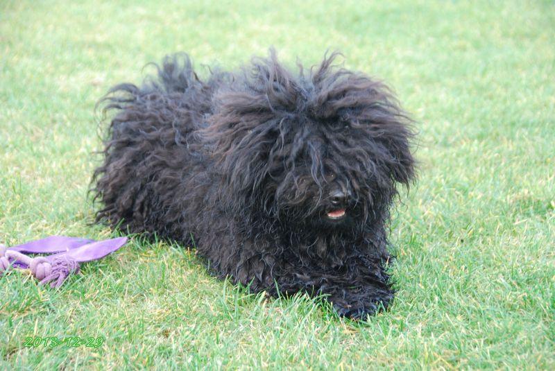 Nyílpuskával próbáltak megölni egy kutyát Tárnokon