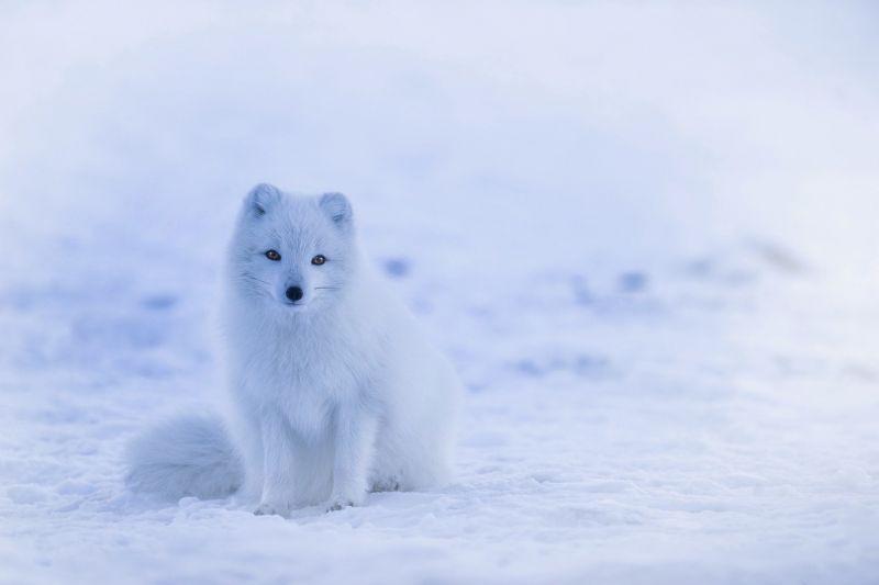Több száz emlősfaj hallhat ki az évszázad végére