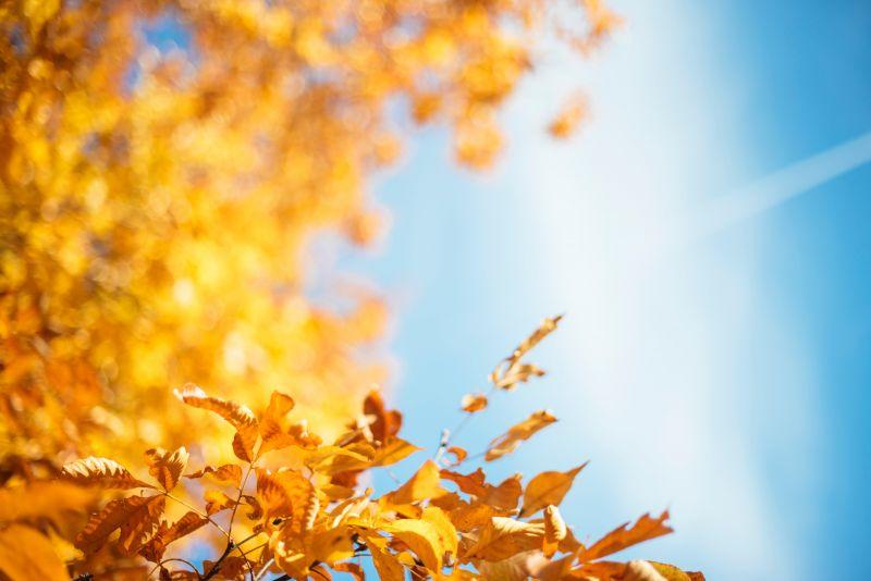 A jövő hét közepén gyönyörű őszi napok várnak ránk