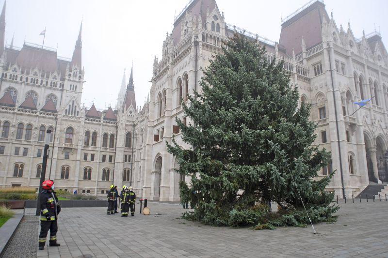 Felállították az ország karácsonyfáját