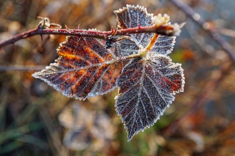 Az első igazán fagyos őszi reggelre ébredt az ország idén