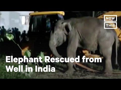 Videó: tizennégyórás mentőakcióval emeltek ki egy elefántot egy kútból Indiában