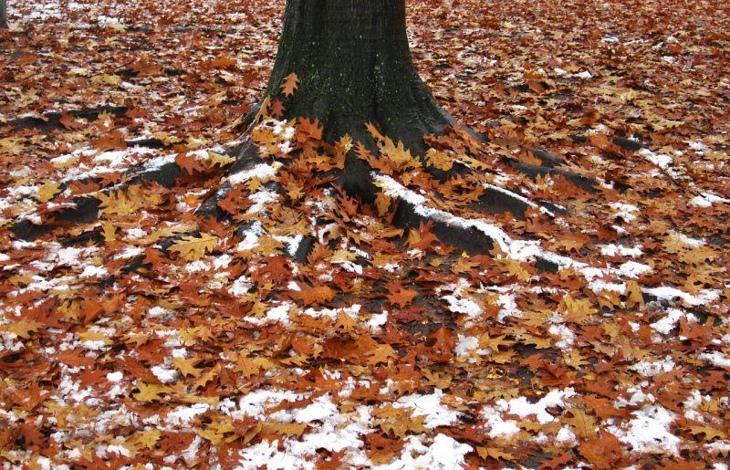 Esős idővel indít a karácsony, de minimális havazás is lehet belőle