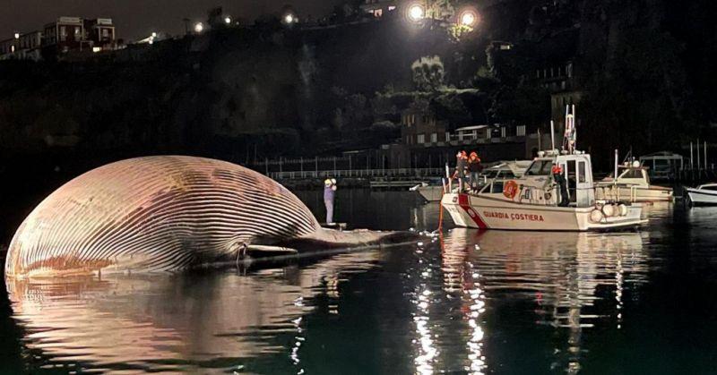 Óriási bálnatetemet vontattak ki a partra Olaszországban