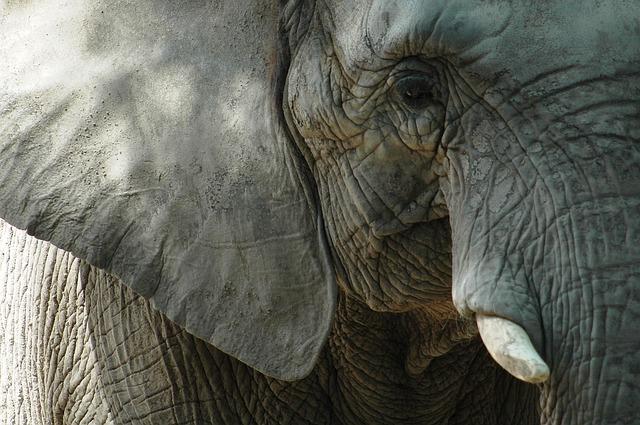 Állatkerti elefántokról készített 30 ezer hőkamerás felvételt – ezért