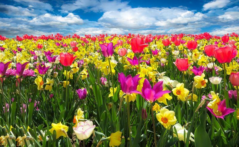 Napos idővel búcsúzik a tavasz első hétvégéje