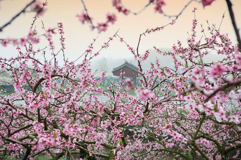 A meteorológusok csak bíznak abban, hogy a jövő héten a pusztítás nem folytatódik a gyümölcsösökben