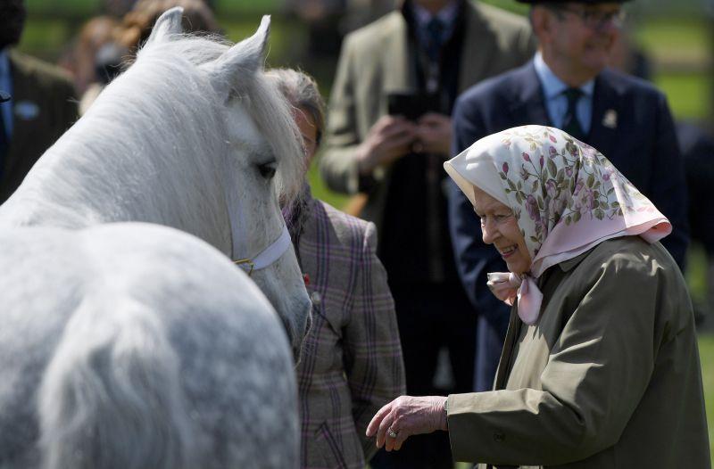 II. Erzsébet királynő hamarosan bejelenti: Törvénybe foglalják, hogy a gerinces állatoknak vannak érzelmeik