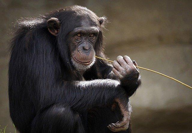 Szökött majmok élnek egy dél-floridai repülőtér szomszédságában