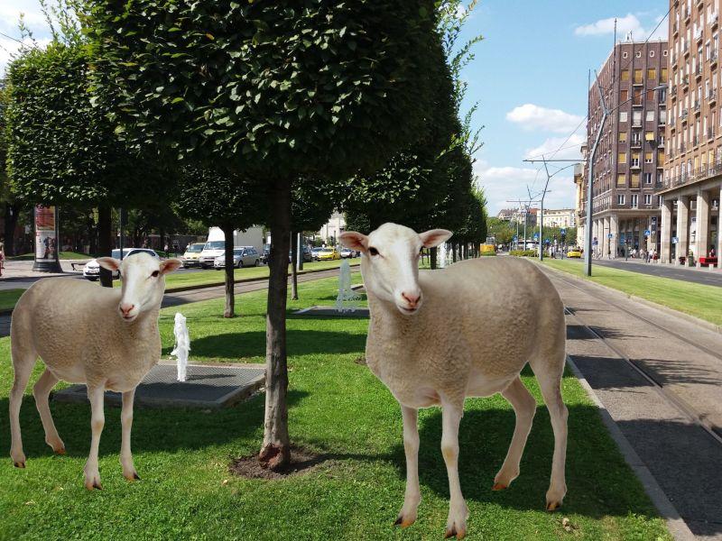 Juhokat és marhákat legeltetne Budapesten a főtájépítész – mutatjuk a koncepciót