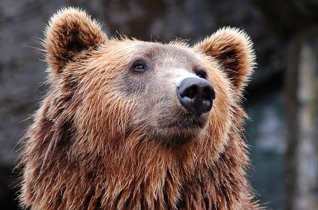 Medve rontott be egy szállodába Szlovákiában
