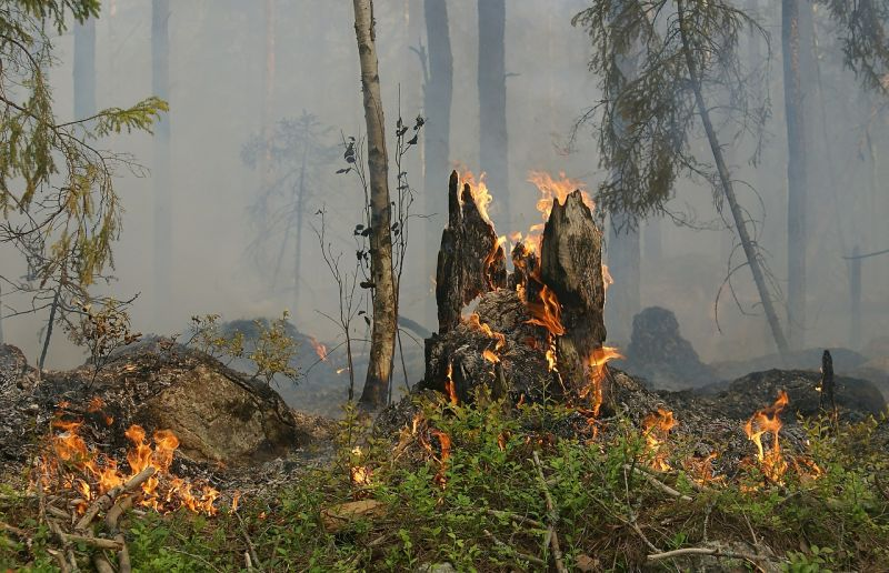 Tűzgyújtási tilalom lép életbe három megyében