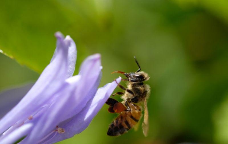 Van egy elég rossz hírünk az allergiásoknak