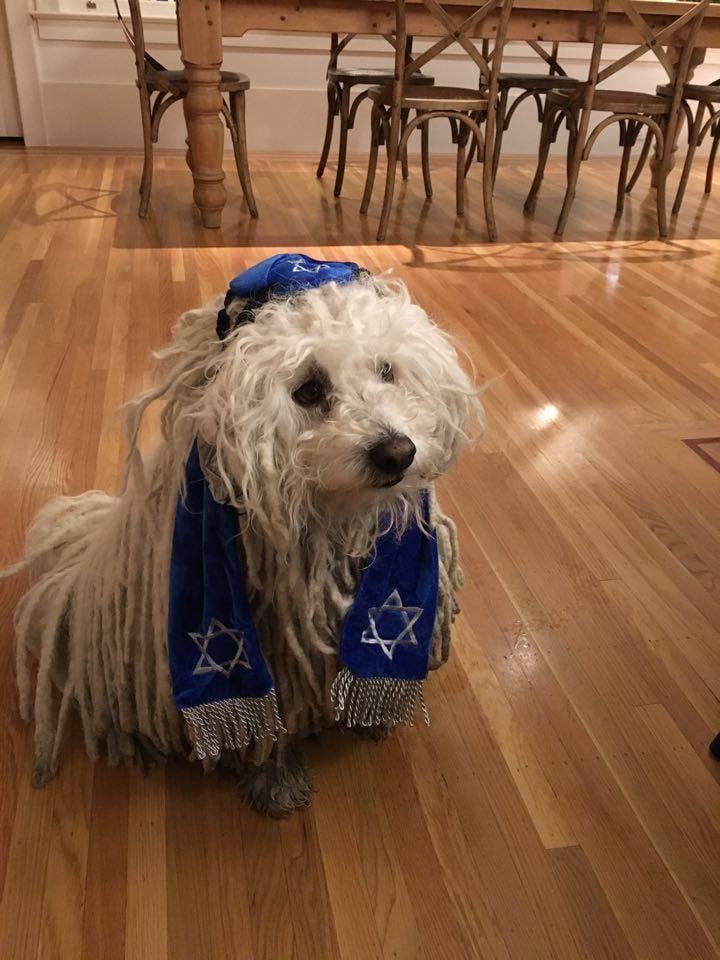 Zuckerberg zsidó öltözetet adott a pulikutyájára, jöttek az antiszemita kommentek