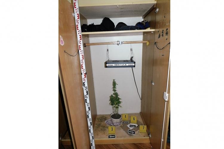 Egy egész tő marihuánát füleltek le a rendőrök egy debreceni lakás szekrényében