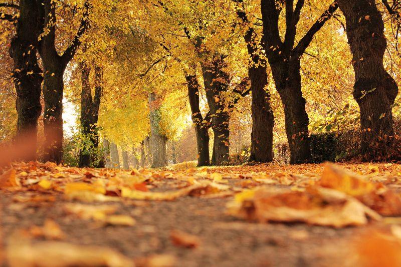 Irány a szabad! Gyönyörű őszi idő lesz szombaton és vasárnap